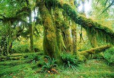 In Search of Silence: Hoh Rain Forest, Washington