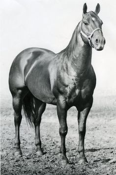 Peppy San      (Leo San x Peppy Belle)      AQHA Hall of Fame     NCHA Hall of Fame     NCHA World Champion     1967 AQHA High Point Cutting Stallion     LTE $49,478     Sired earners of $10.6 million
