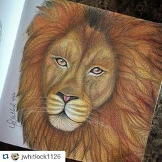 Color Pencil Art Coloring Book Pages Inspiration Animal Kingdom Drawings Colouring Techniques Tips Colored Pencils