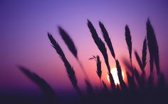Sunset Time Wide  #Sunset #Time #Wide