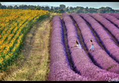 Girl in Lavender by Karim SAARI on 500px