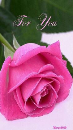 Decent Image Scraps: For You Animation Roses Gif, Flowers Gif, Beautiful Rose Flowers, Beautiful Gif, Love Rose, Imagenes Gift, Rose Reference, Good Morning Flowers, Flower Images