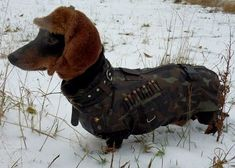 Redefining Hunting Dog