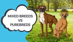 Mixed Breeds vs Purebreds — | Innovet Pet Canadian Eskimo, Pug Beagle, Expensive Dogs, Australian Terrier, Buy A Dog, Cute Dog Pictures, Dog Mixes, Purebred Dogs, The Fox And The Hound