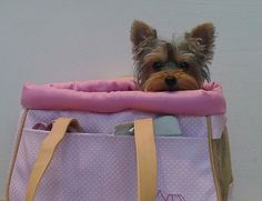 Where are we going? See I told ya I could put in my purse and no one would know ;)
