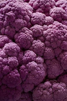 Purple Cauliflower by amy allcock on Flickr