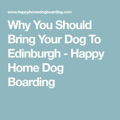 Why You Should Bring Your Dog To Edinburgh - Happy Home Dog Boarding