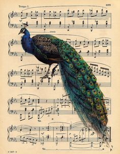 Peacock on antique music sheet
