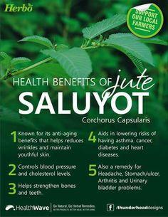 Health benefits of Saluyot
