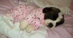What an angel! Big Puppies, Super Cute Puppies, Cute Dogs, Animals And Pets, Baby Animals, Cute Animals, Cute Animal Pictures, Puppy Pictures, Betty Boop