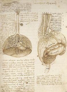 Leonardo da Vinci   The Mechanics of Man