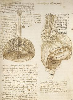 Leonardo da Vinci | The Mechanics of Man http://www.pinterest.com/maher97103/leonardo-da-vinci/