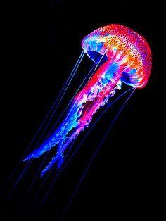 jellyfish,lands got flowers, seas got me! Underwater Creatures, Underwater Life, Ocean Creatures, Beautiful Sea Creatures, Animals Beautiful, Belle Image Nature, Jellyfish Art, Wale, Foto Art