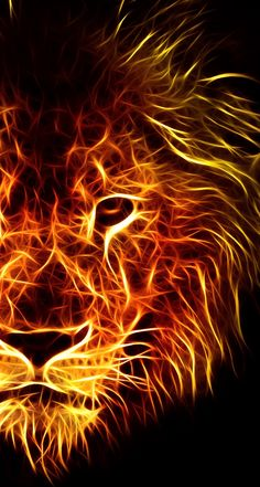 to drawing a lion Lion Live Wallpaper, Drawing Wallpaper, Wolf Wallpaper, Animal Wallpaper, Wallpaper Jungle, Lion Images, Lion Pictures, Fire Lion, Lions Live