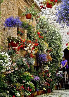 . Beautiful gorgeous pretty flowers