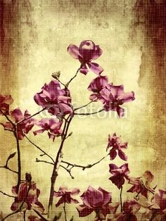 Choose a wall mural  texture, grungy, grunge - beautiful grunge with magnolia. PIXERS wall murals made of great fabrics. Choose artistic photos from our catalog.