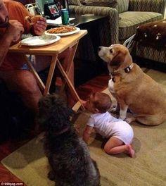 Lehetetlen ellenállni a kaját kunyeráló kutyáknak