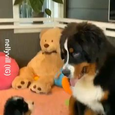 Cute Little Animals, Cute Funny Animals, Funny Dogs, Cute Animal Videos, Cute Animal Pictures, Cute Dogs And Puppies, I Love Dogs, Doggies, Animal Memes