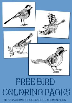 Free Bird Coloring Pages - Free Printable Coloring Pages in Adult Coloring Pages style. Fun for kids and adults! Bird Coloring Pages, Free Printable Coloring Pages, Coloring Pages For Kids, Coloring Sheets, Coloring Books, Free Printables, Fairy Coloring, Mandala Coloring, Birds For Kids