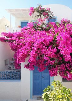 Bougainvillea cascading over blue door, Oia, Santorini #Greece #travel