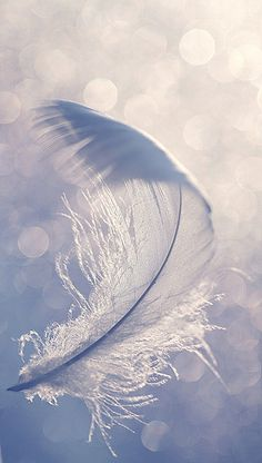 luftige Feder - airy feather by Manuela Salzinger, via Flickr