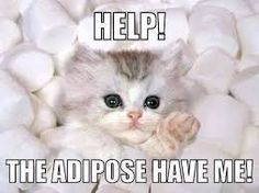 "Omg!!! This cat is drowning in the ""Adipose""!!!    In the most ADORABLE way possible!!"