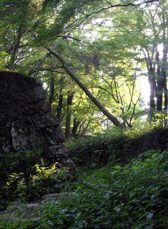 高取町 高取城跡 石垣と木漏れ日 : 魅せられて大和路