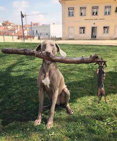 """Please tell the wiener dog to leggo my schtick!'"