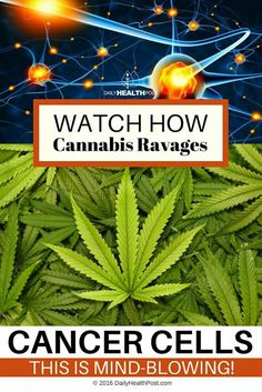 In Case You Missed: How Cannabis Ravages Cancer Cells.