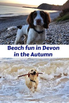 Andrewshayes lists the Top Best East Devon Dog Pet Friendly BEACHES. Plenty of beaches for you and your pet to enjoy on Holiday in East Devon. Dog Friendly Holidays, Holiday Park, Run Around, Beach Fun, Winter Months, Dog Walking, Dog Friends, Devon, Pet Dogs