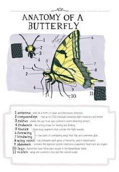 Nature Anatomy: A Glorious Illustrated Love Letter to Curiosity and the Magic of Our World   Brain Pickings