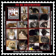 ++NY++ THROUGH NO FAULT OF THEIR OWN, 17 PRECIOUS CATS ARE TO BE DESTROYED 02/09/16 - - Info TO BE DESTROYED - Click for info & Current Status: http://nyccats.urgentpodr.org/montage-071215/