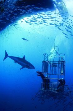 shark diving... south africa. Most people want to be in the air jumping out of planes for adventure. I want to be under the ocean with sharks
