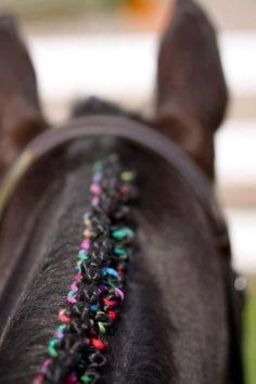 And this! Nobody's rows have ever been this festive. | 20 Horses With Better Hair Than You