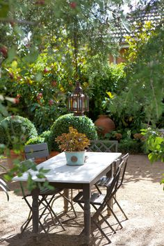Old French cafe chairs  | outdoor living