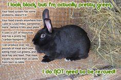 Backyard Meat Rabbits / Homestead & Sustainability/ Healthy Food