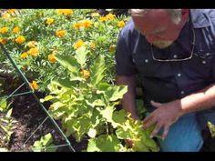 Survival Gardening:  Companion Planting
