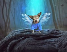 In Memory of Harley Harley went to Heaven, But that's not all there is. He touched an awful lot of hearts, With those small paws of his. His story shared with many, Tales of suffering and pain. And…