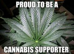 Proud to be a Cannabis Supporter!