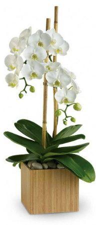 Top 10 Orchid Care Tips (Video) - http://www.ambius.com/blog/top-10-orchid-care-tips/