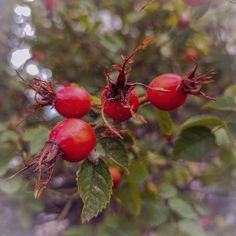 FLOW (@flowathens) • Φωτογραφίες και βίντεο στο Instagram Cherry, Fruit, Instagram, Food, Eten, Meals, Cherries, Diet
