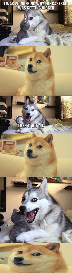 Punny dog
