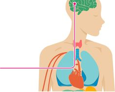 High Blood Sugar Symptoms, High Blood Sugar Levels, Blood Sugar Diet, How To Lower Glucose, High Blood Glucose, Menopause Fatigue, Early Menopause, Menopause Symptoms, Blood Sugar Readings