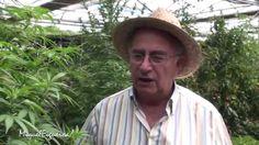 Marihuana, la planta medicinal prohibida con Josep Pàmies