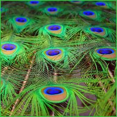 Unveil the all new world of home decor by crafting classy centerpieces and feather wreaths using high-quality natural shades of Peacock Feathers. #peacockfeathers #featherdecoration #centerpieces #decor #featherdress #naturalfeathers www.schumanfeathers.com Feather Wreath, Feather Dress, Peacock Feathers, Peacocks, Craft Items, Centerpieces, Crafting, Classy, Shades