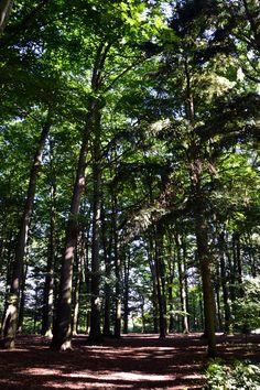 Het Babberichse bos in Babberich (gemeente Zevenaar).