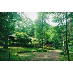 キャプション→I came to Karuizawa. 友達の別荘にお邪魔しています。軽井沢はじめて来て、感動している。 #軽井沢 #karuizawa #森 #森林 ユーザー→matsusitak 場所→軽井沢