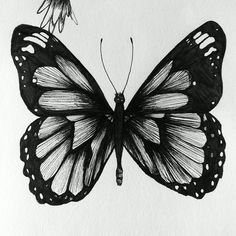 pen_sketches_2__what_an_asymmetrical_butterfly__by_poyopoyo321-d8jzp06.jpg (JPEG Image, 1024 × 1024 pixels)