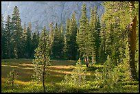 Big Pete Meadow, late afternoon, Le Conte Canyon. Kings Canyon National Park ( color)