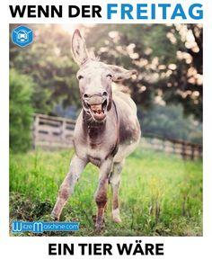 Wenn der Freitag ein Tier wäre - lustiger Esel